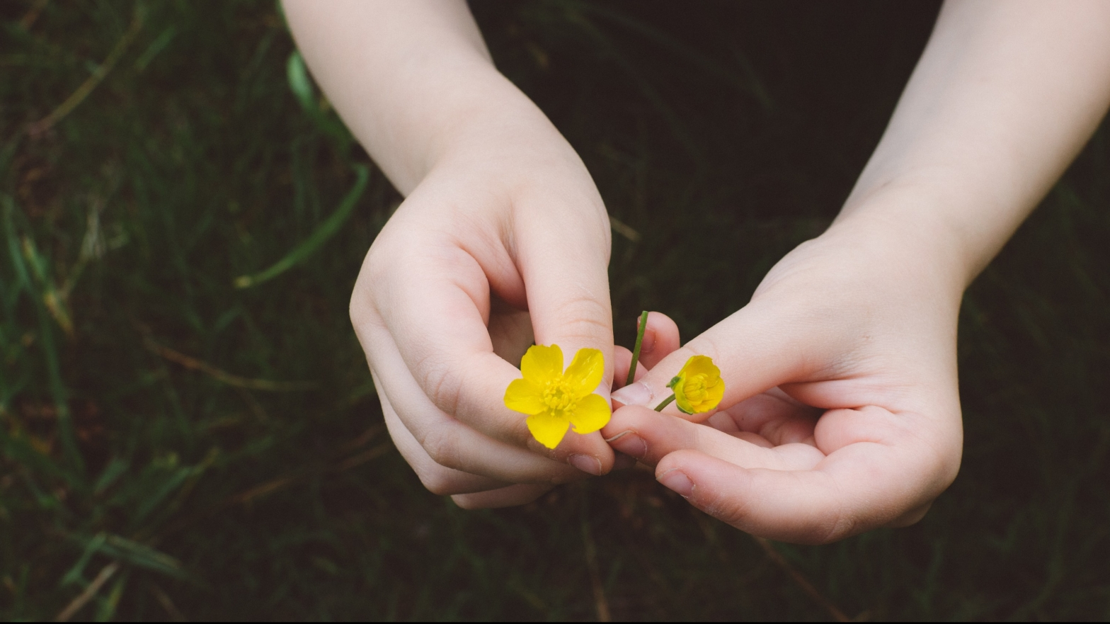 a child's hands holding a buttercup